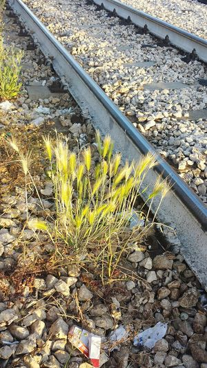 6 in the morning ...Platform Train Station Wainting Railway Wild Plants