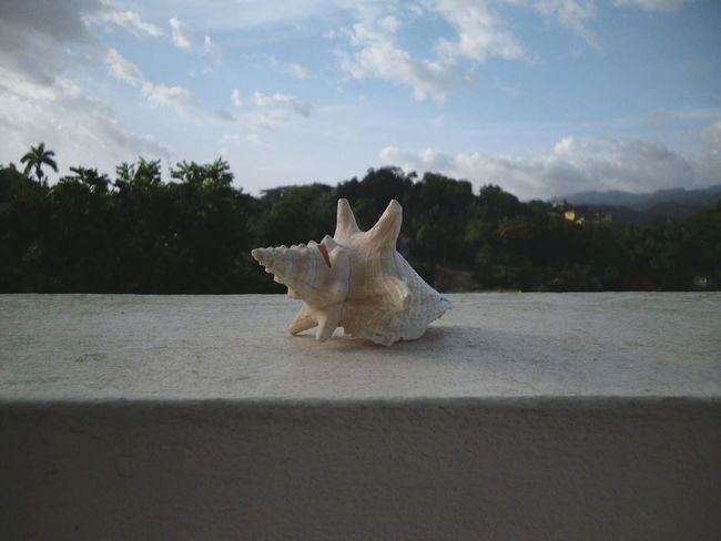 Seashell sitting on ledge in good weather. Afternoon Cloudy Sky Daytime Nature Scenic Sitting The Week On EyeEm View Background Beach Blue Blue Sky Clouds Day Greenery Landscape Ledge Mix Yourself A Good Time Outdoors Scene Scenics Sea Seashell Shell Sky