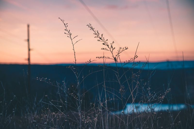Nature Sunset Beauty In Nature Dusk Tranquil Scene Plant Tranquility No People Outdoors Landscape Growth Close-up