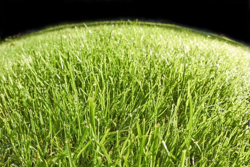 Grass Grass Beauty In Nature Blade Of Grass Close-up Environment Field Golf Golf Course Grass Green Color Growth Land Lawn Meadow Motion Nature No People Outdoors Plant Playing Field Sport Sunlight