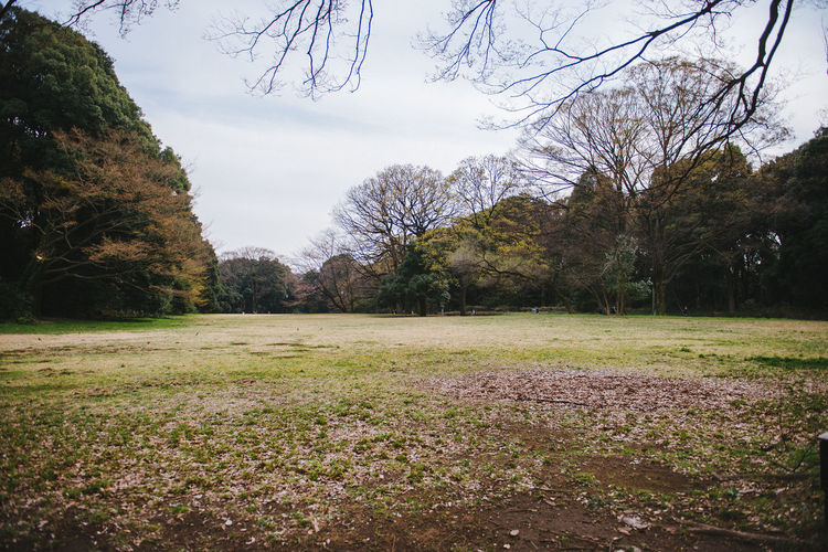 Yoyogi Park Bare Tree Beauty In Nature Branch Day Field Grass Grassy Green Color Growth Idyllic Landscape Nature No People Non-urban Scene Outdoors Scenics Sky Tranquil Scene Tranquility Tree