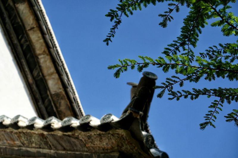 Architecture History Built Structure Travel Destinations Tree Day Low Angle View Ancient Ancient Civilization Building Exterior No People Outdoors Sky Roof Blue Nature