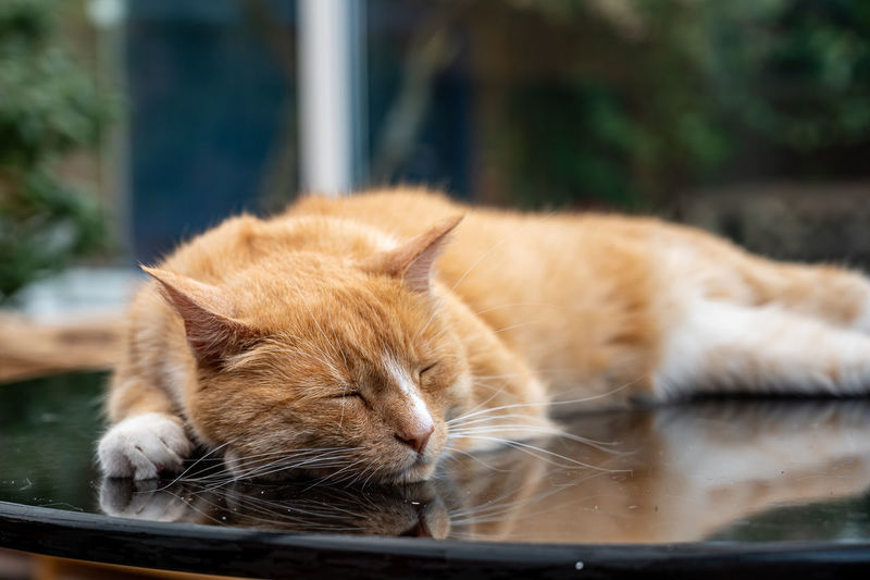 Ginger cat asleep on a table