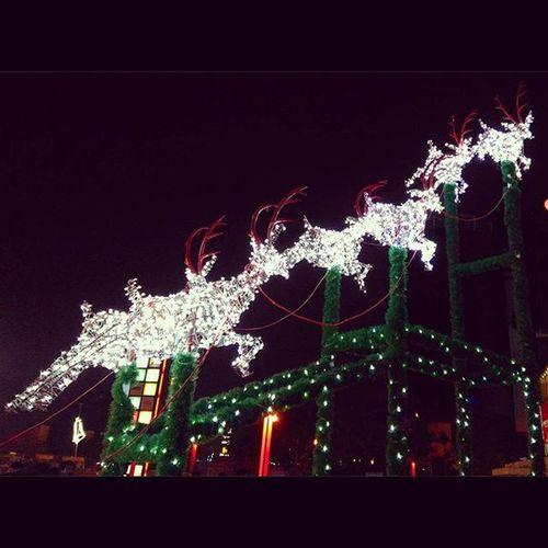 Santaandhisreindeer Tothestars Christmas Instapic Lights