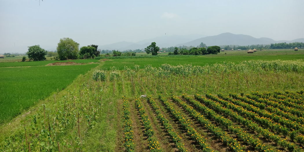 Tree Irrigation