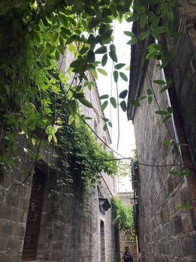 街道 Plant Tree Growth Architecture No People Built Structure Nature