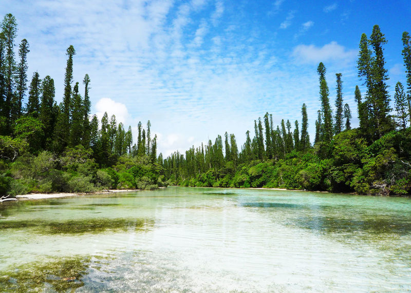 Ile Des Pins 2009 Beauty In Nature Forest Growth Landscape Nature New Caledonia Outdoors Sea Sky Tree Water イルデパン ニューカレドニア ビーチ 海