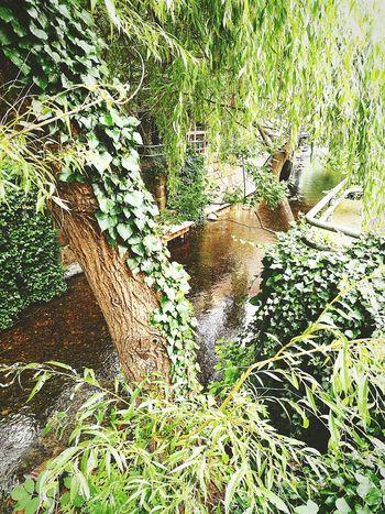 Tree And Water In Germany Baum Tree Stadt Plön Ostsee