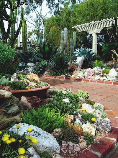 Awesome Succulent Garden Design, filled with life and complementary schemes. Landscape Gardening Zen Succulents