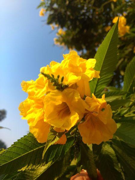 Flower Head Flower Leaf Yellow Petal Beauty Close-up Sky Plant Flowering Plant Plant Life