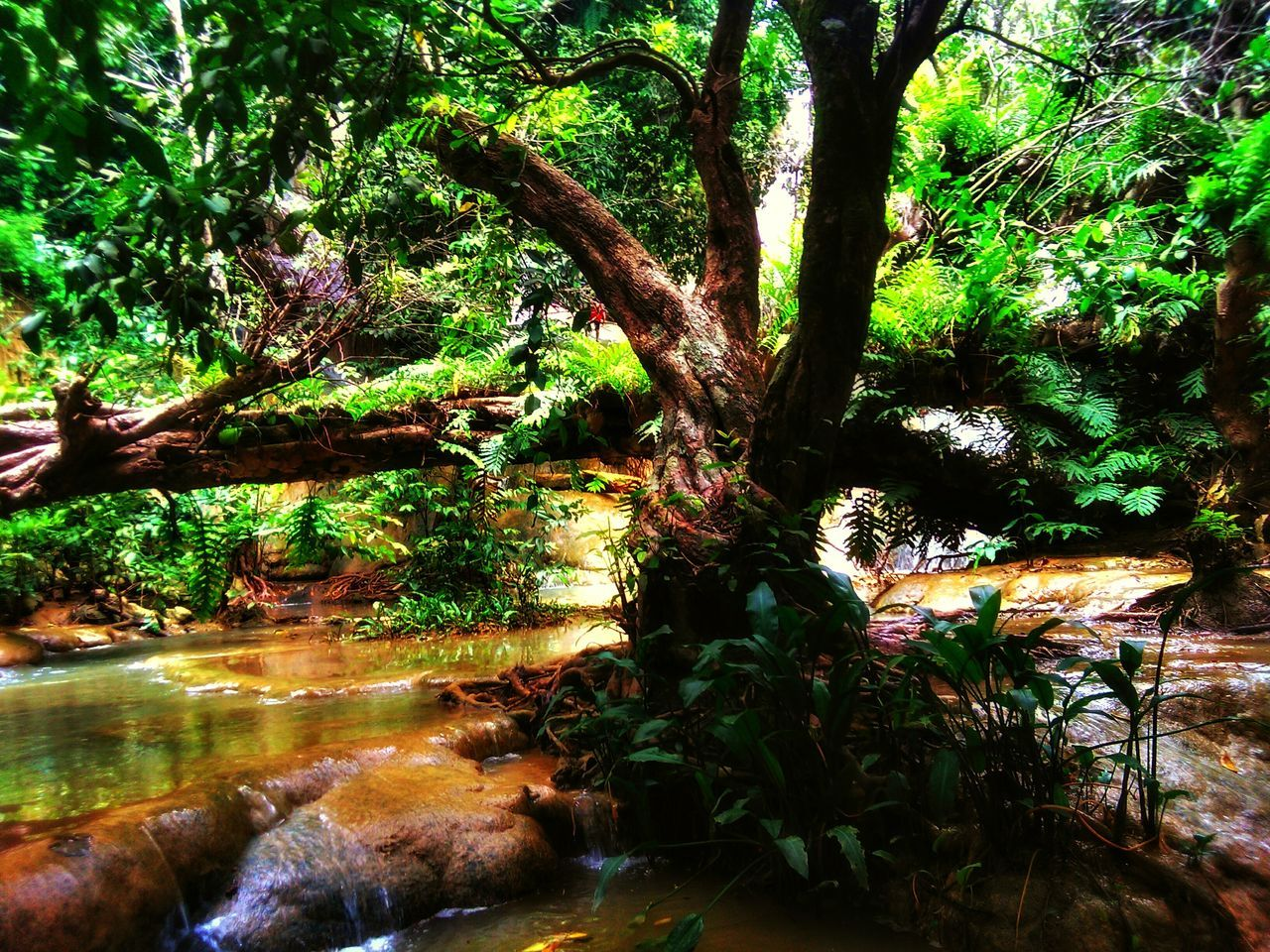 tree, growth, nature, outdoors, water, beauty in nature, tree trunk, day, plant, no people, flower, branch, freshness