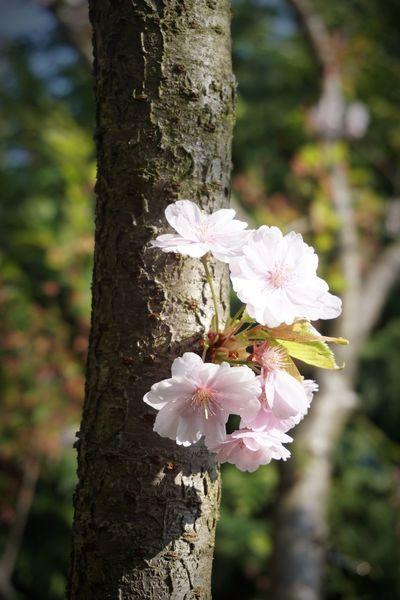 Flowerporn Japonesegarden Gärten Der Welt Peaceful EyeEm Nature Lover
