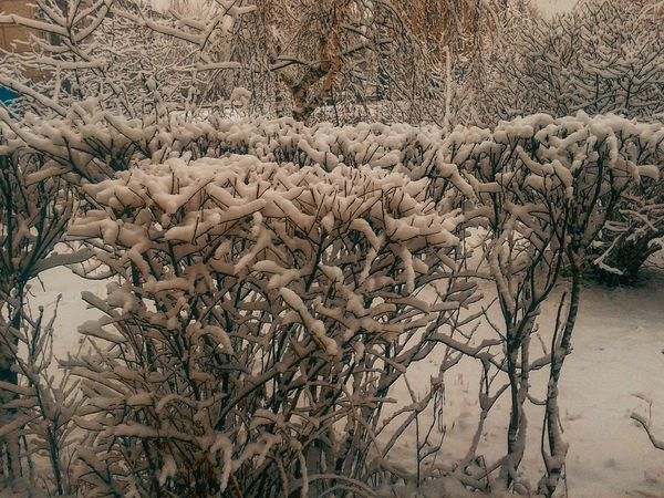Nature Bare Tree Branch Tree Dead Plant Winter No People Outdoors Cold Temperature Beauty In Nature Growth Day Plant Close-up