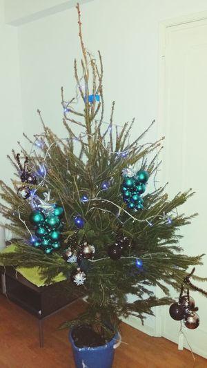 It's Christmas's Three 🎄 Relembrar A Infância Pinheiro De Verdade Estevaiseraantiga