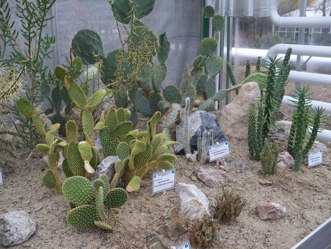 Cactus Concrete Day Green Green Color Growing Growth Large Group Of Objects Nature Outdoors Plant Soil Spiked Stone Succulent Plant Surface Level Thorn Tranquility