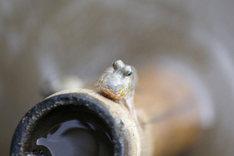 Close-up of fish head.