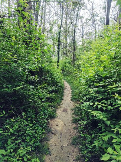 Hiking Hiking Trail Hiking Path Trails And Paths Green Forest Landscape Spring Summer Lush Foliage Growth The Way Forward Hidden Path What Lies Ahead Where Paths Lead Seneca Park Louisville Kentucky  Urban Hiking