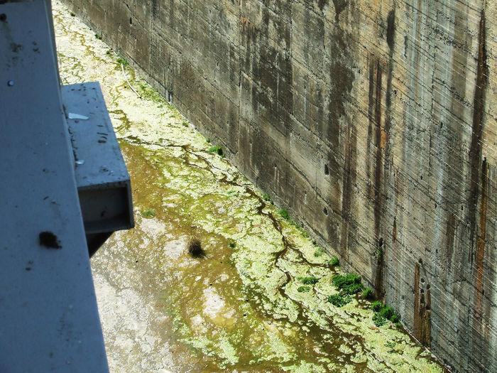 Alga Algae Brown Brown And Green Concrete Concrete Jungle Dam Damming El Pintado Embalse De El Pintado Engineering Grass Presa El Pintado Seaweed Steel Steel Structure  Verdina Water
