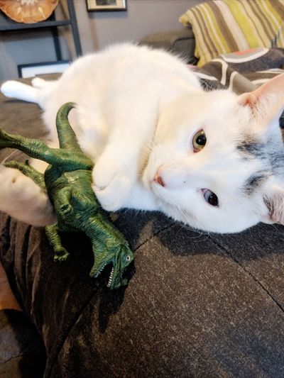Visual Artist Dinosaur White Cat Eyes Different Eye Color Pets Portrait Lying Down Looking At Camera Domestic Cat High Angle View Close-up Feline Cat At Home Paw Adult Animal The Portraitist - 2018 EyeEm Awards The Creative - 2018 EyeEm Awards The Still Life Photographer - 2018 EyeEm Awards Creative Space The Photojournalist - 2018 EyeEm Awards EyeEmNewHere