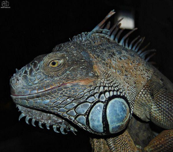 Animal Animals Nature Animal Themes Looking At Camera Reptiles Reptile Sun River Nikon Water