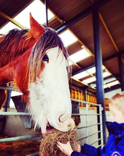 Horse Day Domestic Animals Animal Themes Mammal Indoors  No People Close-up