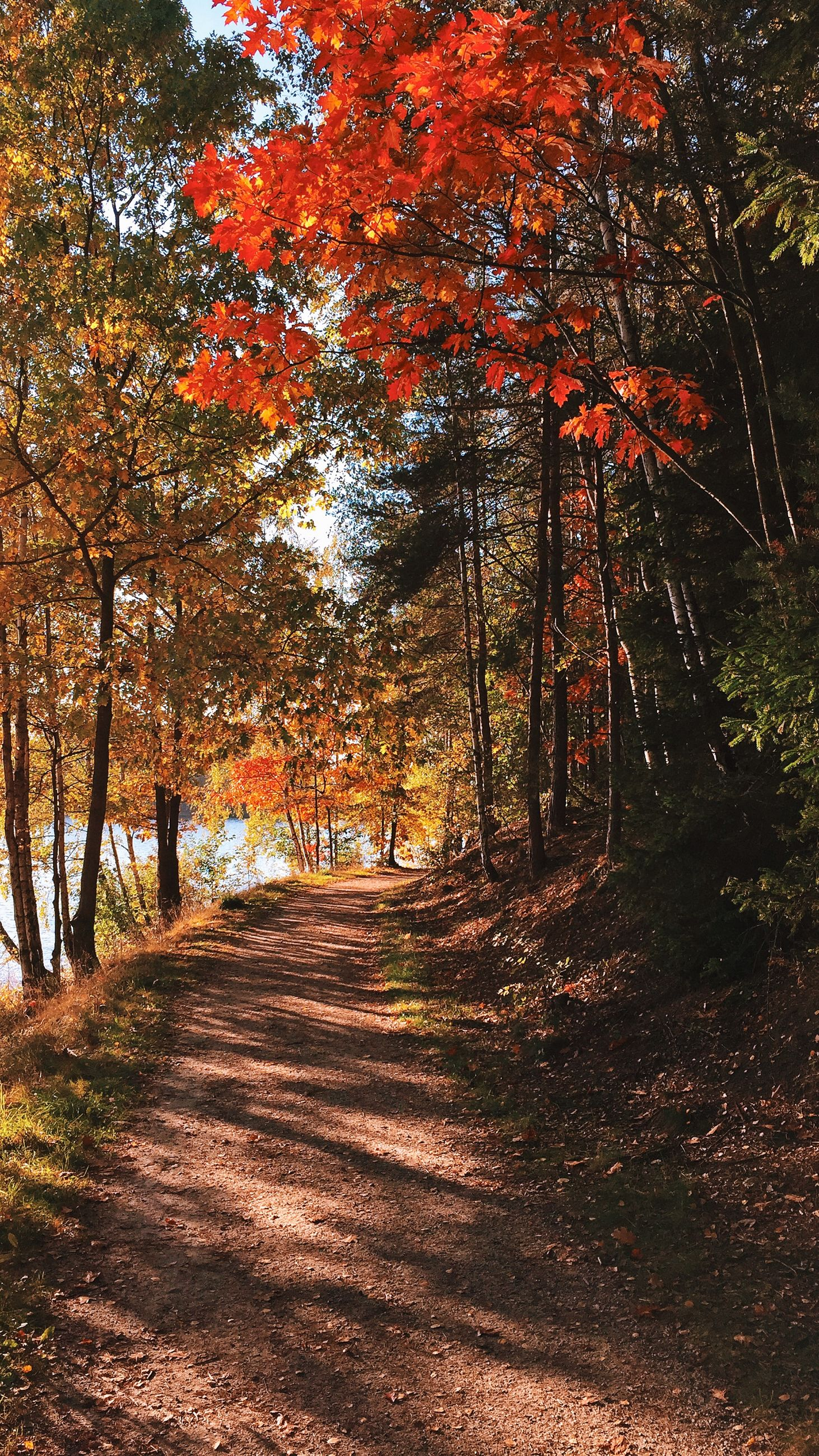 tree, tranquility, the way forward, autumn, tranquil scene, nature, beauty in nature, forest, change, growth, scenics, dirt road, tree trunk, branch, sunlight, footpath, landscape, orange color, season, woodland