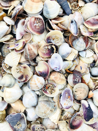 Sea shells background Backgrounds Close-up Day Nature No People Outdoors Sea Sea Background