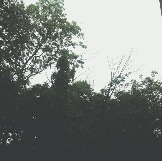 Rain 💦✨ Rain Clouds Greentree