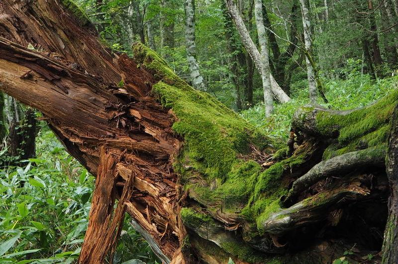 TreePorn Nature_collection EyeEm Nature Lover EyeEm Best Shots - Nature 岳沢湿原