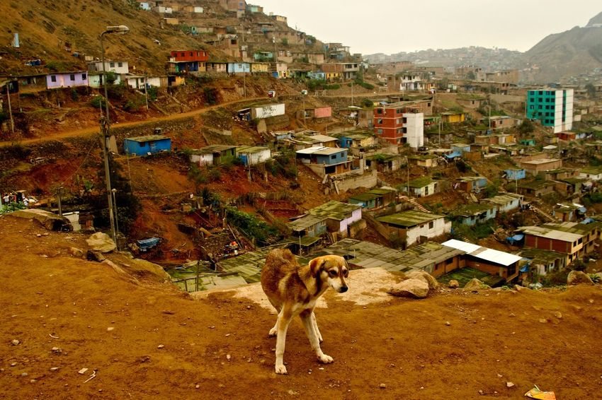 Stray dog Favelas Dog Architecture Built Structure Building Exterior Animal Themes Mammal Domestic Animals High Angle View Cityscape One Animal Nature Town Outdoors No People Day EyeEmNewHere EyeEmNewHere
