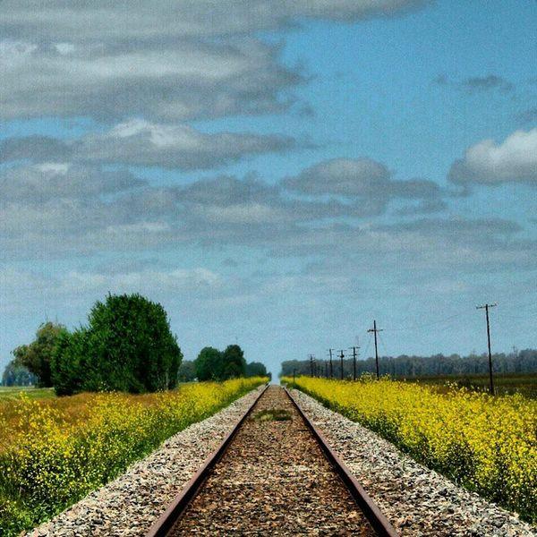 Ferrocarril Roca, altura Km. 360 RP2, Viboratá, Buenos Aires Viboratá F .F.C.C.Roca Tren Riel Ruta2 Railway