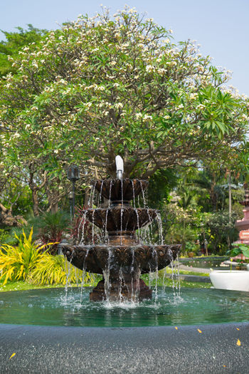 Fountain Tree Art Day Fountain Frangipani Frangipani Flower Park Splashing Sunny Day Tree น้ำพุ ลีลาวดี