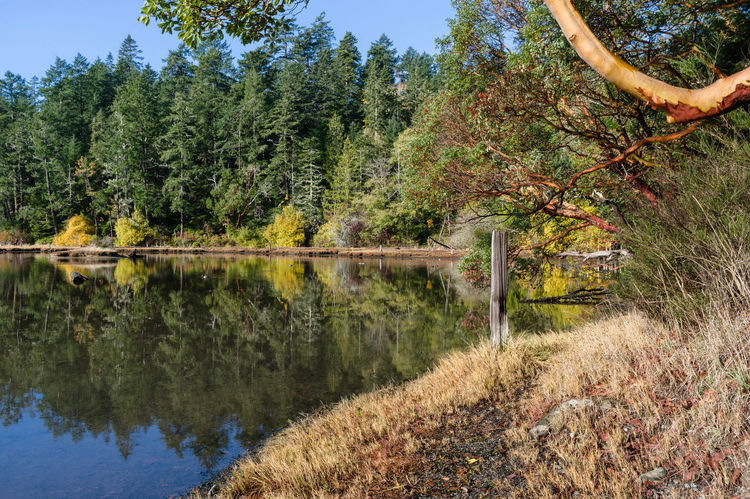 Arbutus Tree Madrona Tree Beauty In Nature Change Day Forest Green Color Growth Lake Land Nature No People Non-urban Scene Outdoors Plant Reflection Scenics - Nature Tranquil Scene Tranquility Tree Water