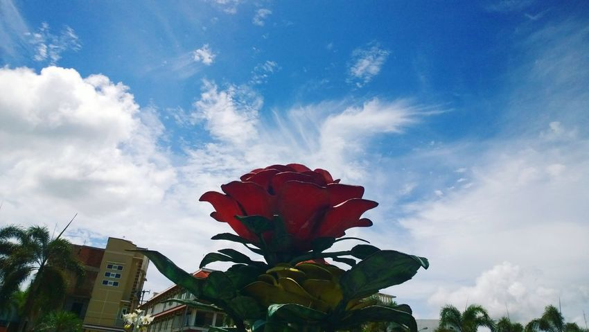 Flower Cloud - Sky Red Growth Low Angle View Outdoors Flower Head No People INDONESIA Indonesia_photography Indonesian Street (Mobile) Photographie Cloud