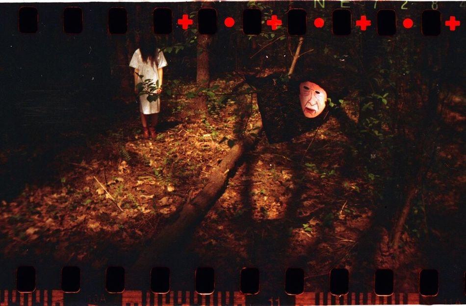 Kicsigaboka Film Photography Lomography Sprocket Rocket Panorama Forrest