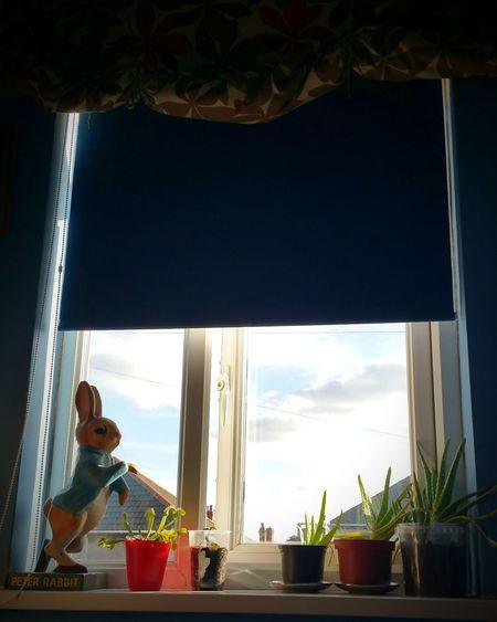 Window Sky Skyline Outside My Window Clouds Venusflytrap Aloe Vera Peter Rabbit