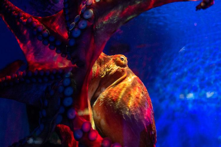Langkawi Animal Themes Animal Vertebrate Animal Wildlife Animals In The Wild Sea One Animal Swimming Water Underwater Tank Aquarium Sea Life No People Nature Close-up Marine Animals In Captivity Mouth Open