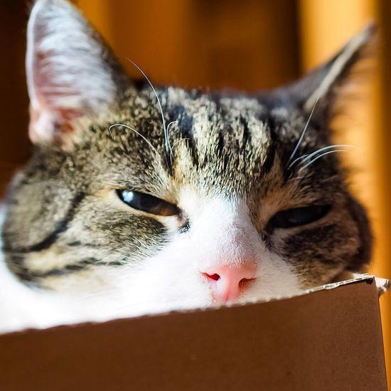 Cat Portrait Paul Domestic Animals Domestic Cat Sexypose Relaxing Katze Katzen Cats Of EyeEm Boy Tomcat Nature Pets