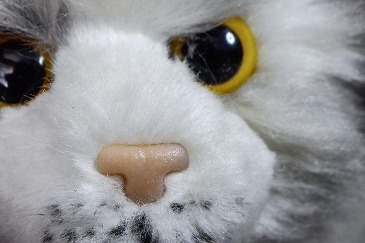 Stuffed feline