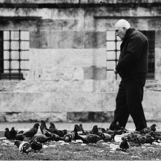 Hayat kısa, kuşlar yorgun..