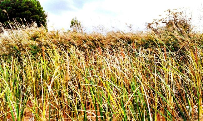 HDR EyeEm Nature Lovers Grass Colourful Nature