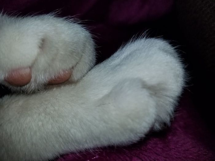 Cats Paw Paw Cat Soft Paws Animal Body Part Pets Animal Themes Animal Leg Domestic Animals Check This Out Enjoying The Moment Relaxing Moments Cat Lover Pet Cozy And Warm Meditation Still Life Photography Abstract White Cats Paw White Trusting Close-up Macro