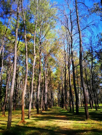 Tree Nature Beauty In Nature Natural Beauty Chiang Mai   Thailand
