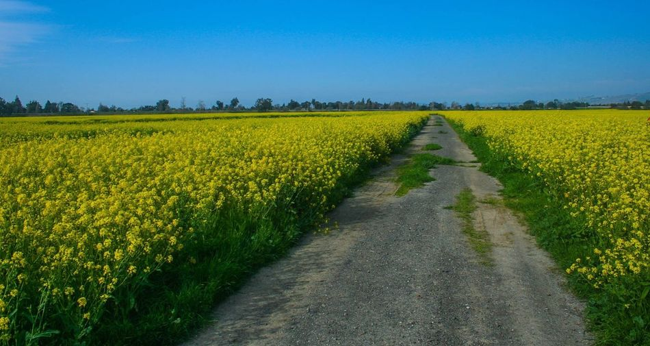Endlessness at a Mustard Field The Essence Of Summer On My Way Paint The Town Yellow