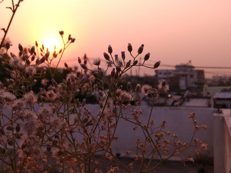 EyeEm Selects Sunset Silhouette Dusk Nature Pink Color Close-up Sky Tree No People Beauty In Nature Outdoors Flower Beauty Bird Day Plant Branch