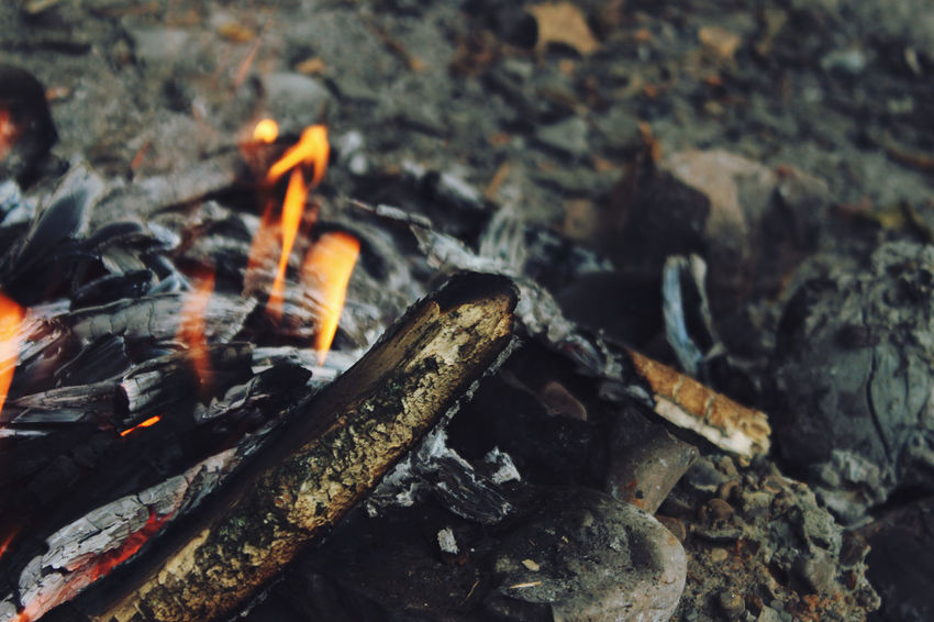Abstract Photography Burning Campfire Flame Nature Wood Abstract Burn Burning Burning Wood Campfire Flames Close Up Close-up Fire And Flames Flame Of Fire Flame Tree Flames & Fire Heat Nature No People Outdoor Outdoor Photography Outdoors Wood - Material Woods