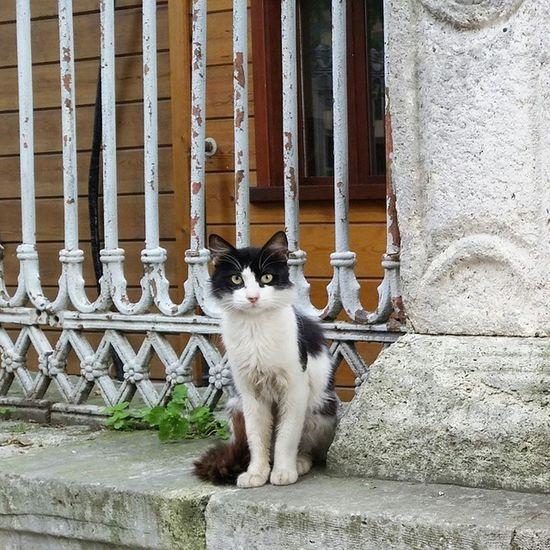 Tom #cats #instacats