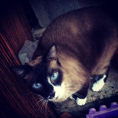 Chelsea découvre l'extérieur 😻 Cat Cute Bébéchelsea