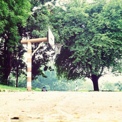 Basketball ❤ Ring Nature Green