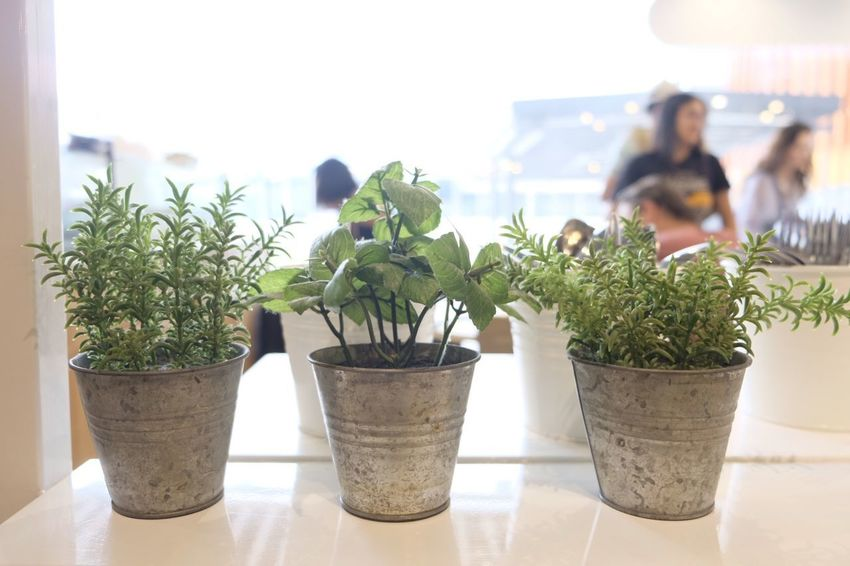 weekend in Singapore Potted Plants Plant Growth Indoors  Day Nature People Adult Close-up